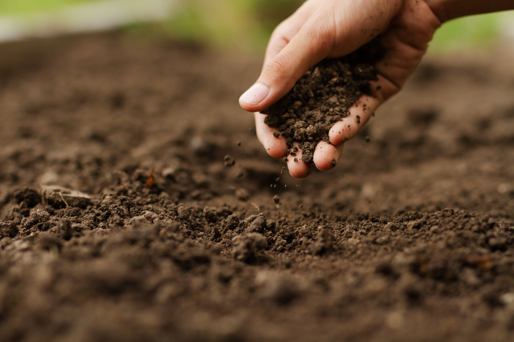 caring maintaining healthy landscape soil